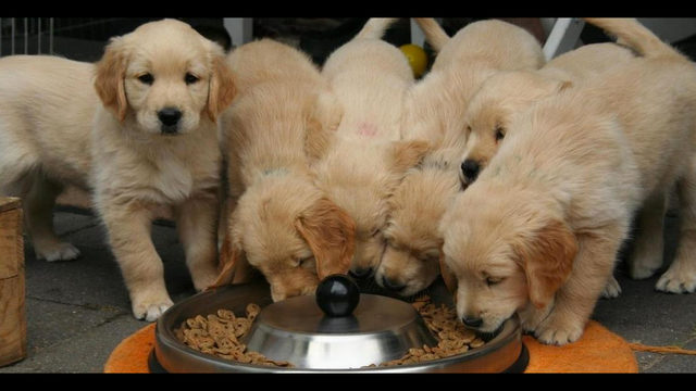 Dog food recall expanding again over possible toxic vitamin D levels