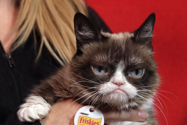 Grumpy Cat has died. The Internet-famous feline with the perpetually miserable mug was 7.