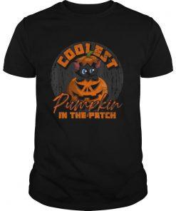 Animal Cat Cool Pumpkin shirt